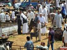 سوق الأضاحي فى الإسكندرية