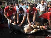 ذبح الأضاحي فى الإسكندرية عقب صلاة عيد الأضحي