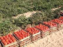 سوء الأحوال الجوية يهدد زراعات الخضر والفاكهة بالمزارع